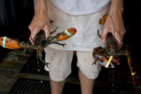 Lobster in Rockport on the North Shore