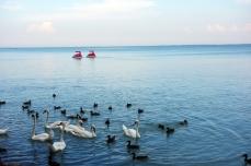 Balaton during the summer