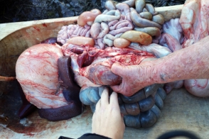 As I marvel at the beautiful array of colors of the organs, Joci points out the heat rising off the animal's innards.