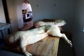 The first pig is halved and lain on the butchering table in the kitchen of the basement floor.