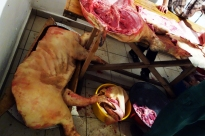 Eventually there is no space left on the table. The third pig is placed in a vat on the floor.