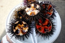 Sea Urchin at Mercado Central de Abastos in Cádiz