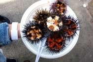 Sea Urchin at Mercado Central de Abastos in Cádiz